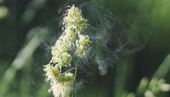 Allergietest – welche Methoden gibt es?